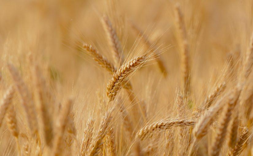 https://sklep.arkop.pl/rolnictwo/kukurydza.html
